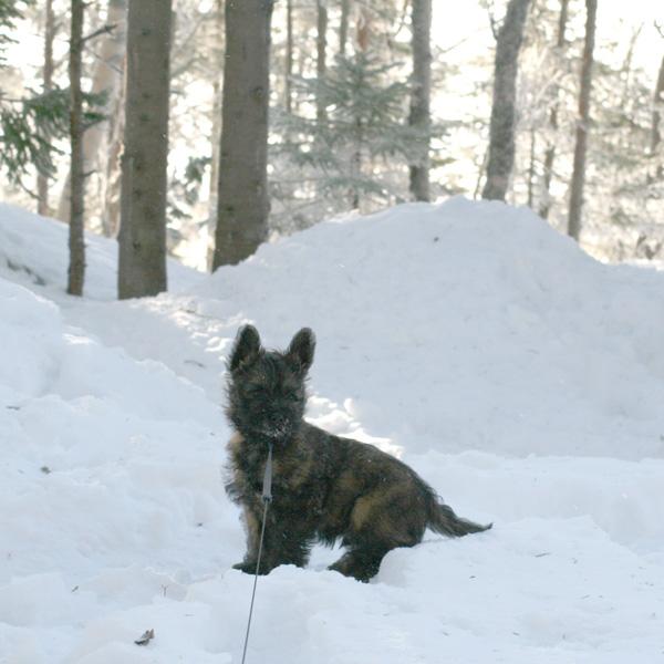 Lukas elsker å leke i snøen