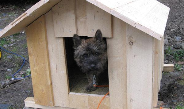hundehus til salgs