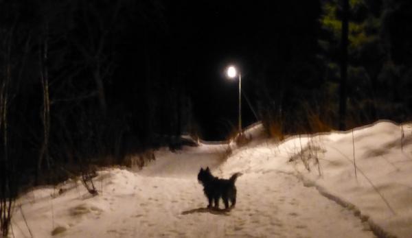 Kveldstur i lysløypa er en favoritt, særlig når ingen skiløpere er der
