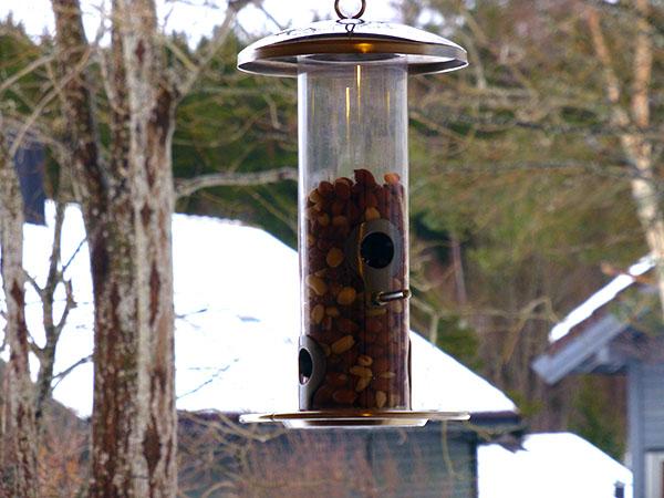 Automat med nøtter til fuglene – kom og spis!