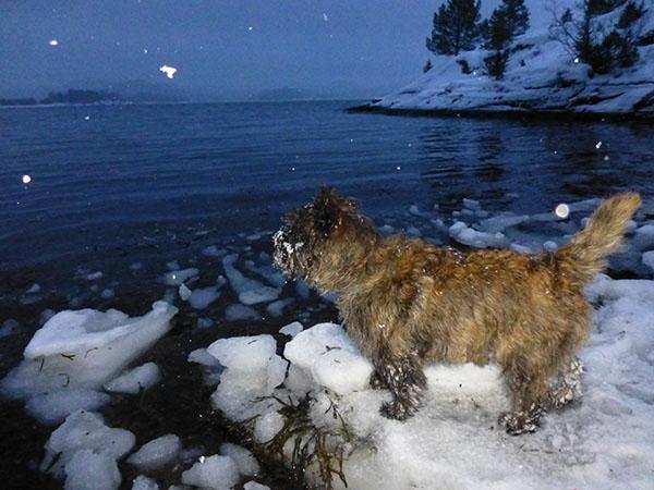 Kveldstur i snøvær i Kårstubukta – er det ikke fint, vel?