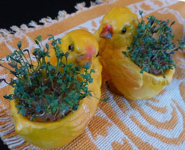 Koselige karsekyllinger på spisebordet