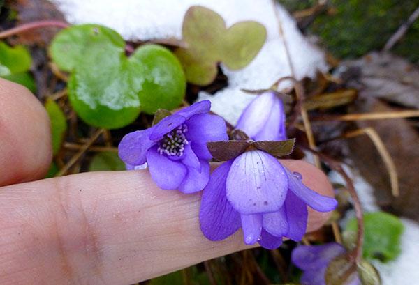 Stakkars lille vakre blomst, henger litt med hodet