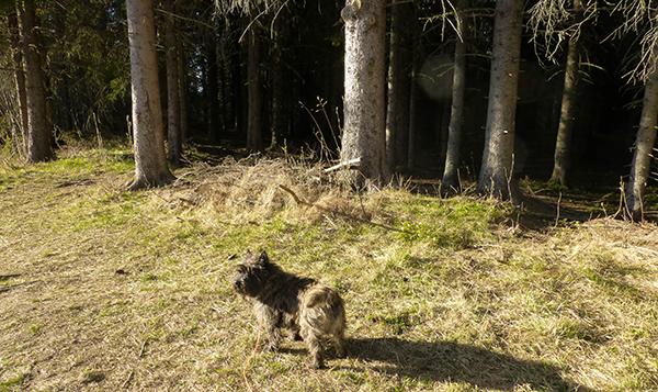 ... men enda kjekkere med gress og skog!