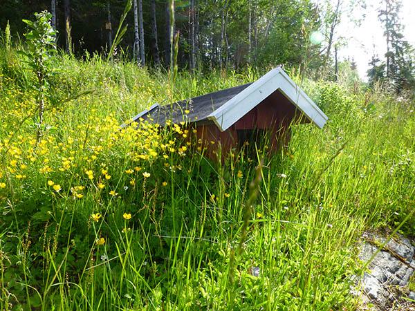 Hundehuset er nesten borte i gresset