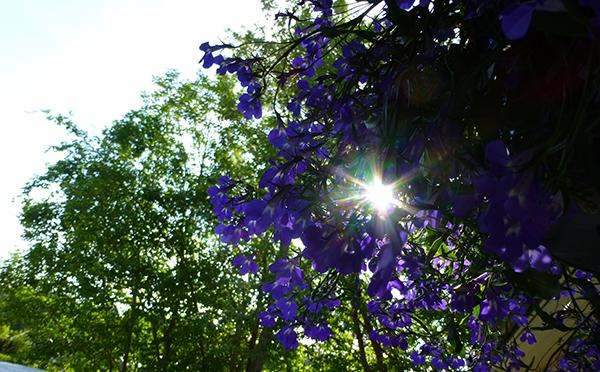 Morgensola på trappa sett gjennom sommerblomster og trær