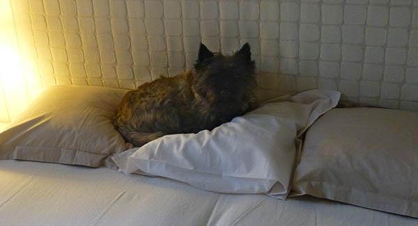 Så snilt å lage ny seng til meg, sier Lukas