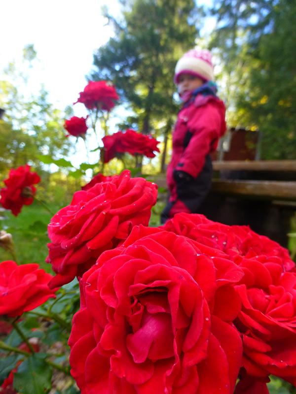 ida-og-rosene