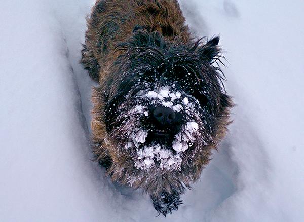 ny-vinter-lukas