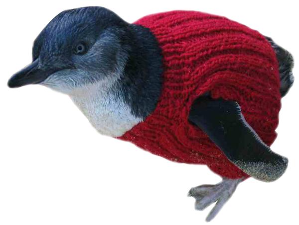 http://penguinfoundation.org.au/about-the-penguin-foundation/wildlife-rehabilitation/