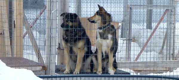 dag2-hunder