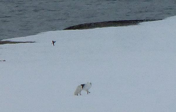 dag2-polarrev
