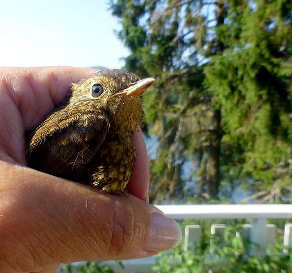 en-fugl-i-handen