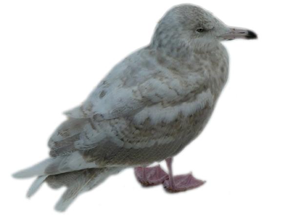 dag9-fugleunge