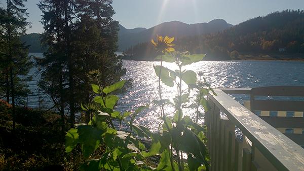 solsikke-oktober