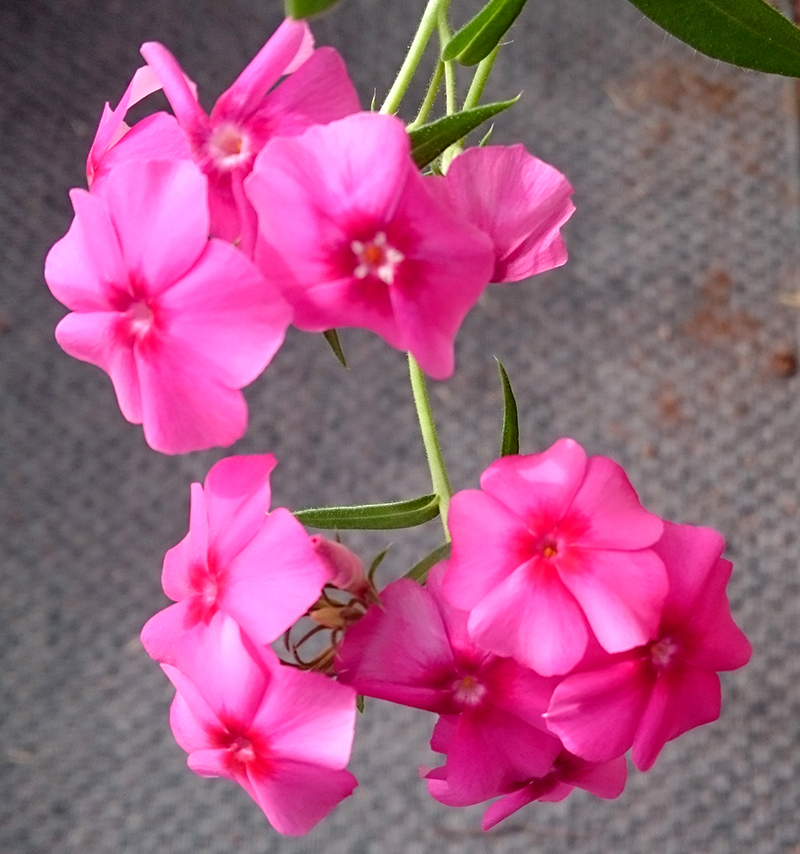 blomster-drivhus