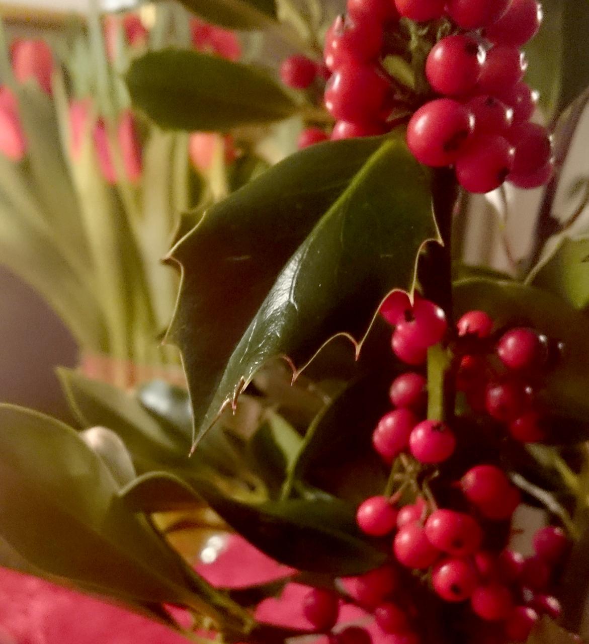 juleblomster