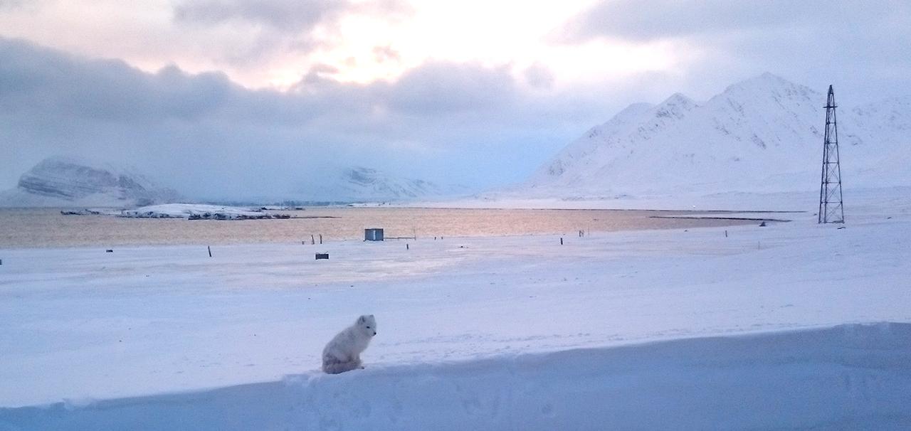 polarrev-amundsenmasta